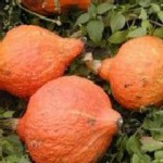 red hubbard squash